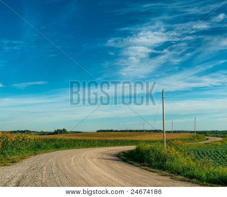 Rural Road Winds Through Corn Fields