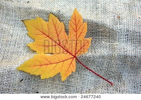Yellow Leaf on Burlap