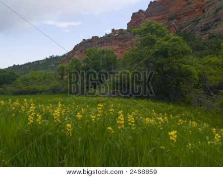 Yellow Flowers And Red Stone