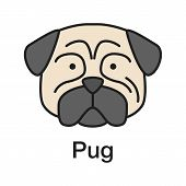 Pug Color Icon. Mops. Companion Dog Breed. Isolated Vector Illustration poster