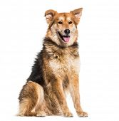Mixed-breed dog, 8 years old, sitting against white background poster