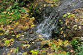 Autumn Falls. The falling maple leaves are mixed with the flow of water in the creek.