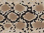 Постер, плакат: Листы стальные с ромбическим шаблон змеиной кожи