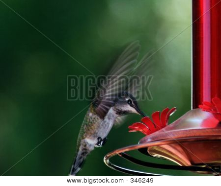 Atingindo o beija-flor