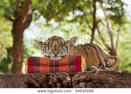 Tigre durmiente