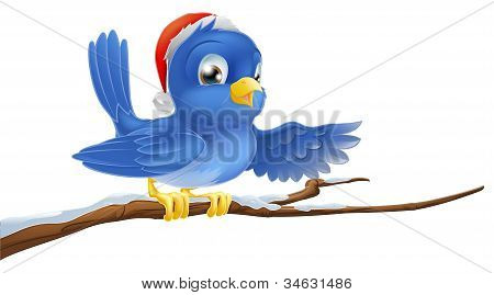 Christmas Bluebird Pointing