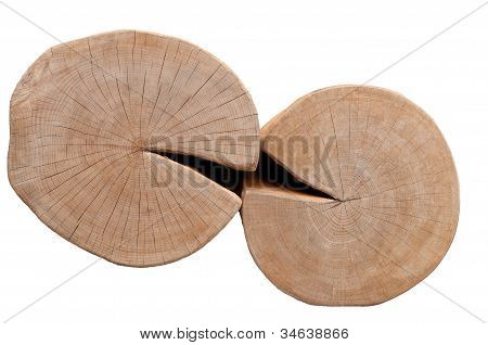 Cross section of two tree trunks kissing on white background