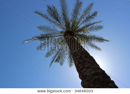 Palm tree rising up to a blue sky