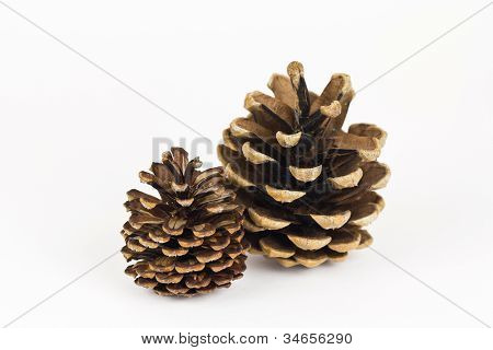 A Pair Of Pine Cones