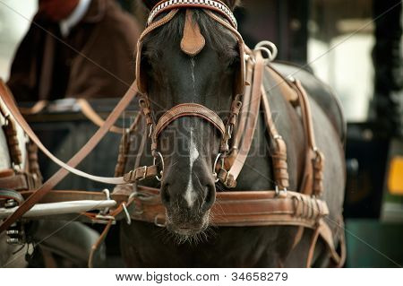 Horse In Carriage