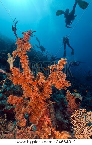 Divers and tropical reef in the Red Sea.