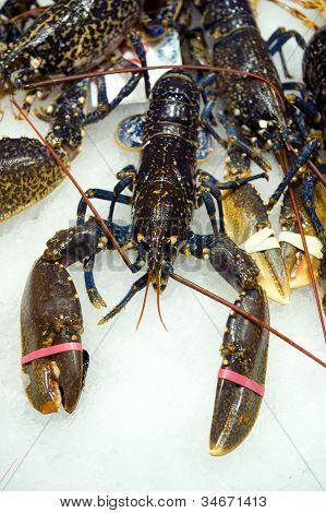 Lobster For Sale
