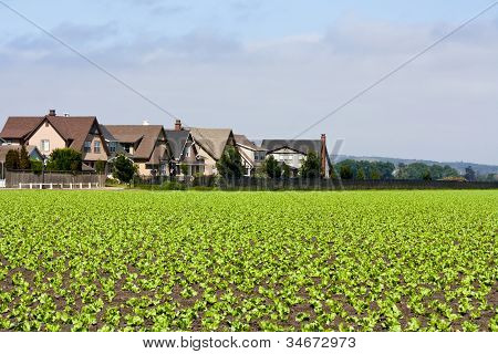 Houses and Row Crops