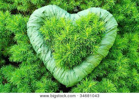 Green, Green Heart