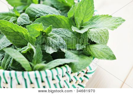basket full of fresh mint - herbs and spices /shallow DOFF/