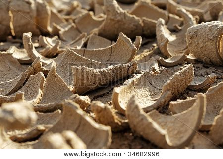Dried mud in a drought