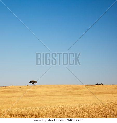 Tree In Golden Field