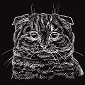 Vector Hand Drawing Portrait Of Scottish Fold Cat In White Color Isolated On Black Background. Monoc poster