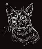 Vector Hand Drawing Portrait Of Snow Bengal Cat In White Color Isolated On Black Background. Monochr poster