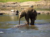 Young Elephant Bathing At The Orphanage poster