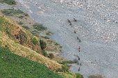 Herd Of Horses Going To The Mountain River Terek In Darial Gorge, Kazbegi District, Mtskheta-mtianet poster
