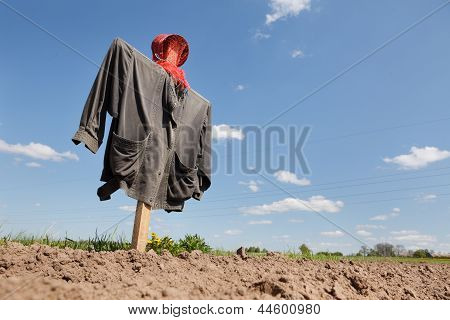Scarecrow On The Field