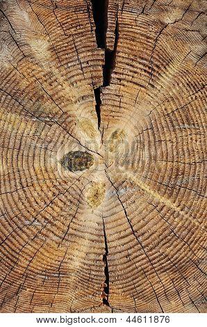 Wooden Cut