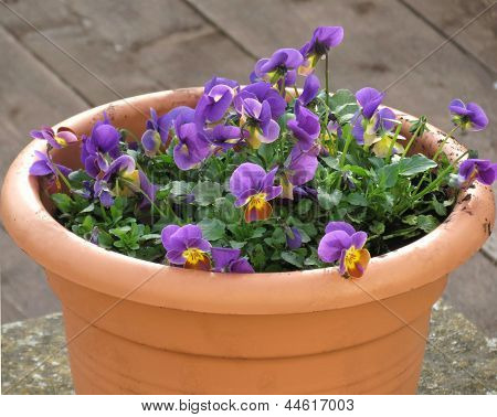 Flowers in pot