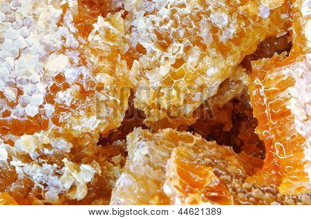 Honeycomb closeup