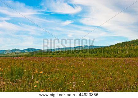 Flavor meadow