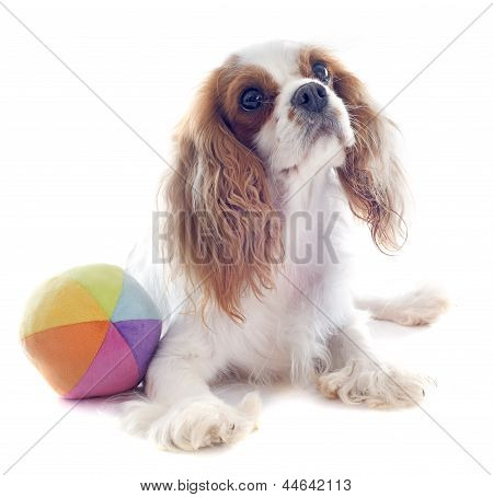 Cavalier King Charles And Ball
