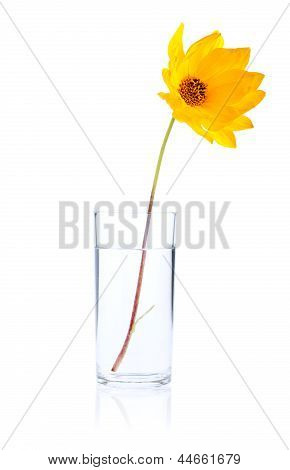Single Fresh Yellow Flower In Glass Water Isolated On White Background