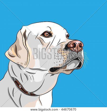 Vector blanco perro raza Labrador Retriever