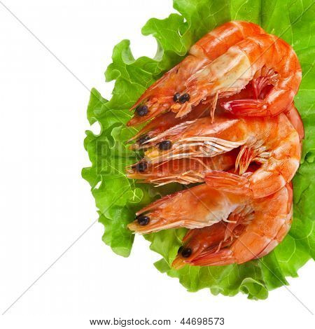 border of Fresh shrimp on a salad lettuce isolated on white background