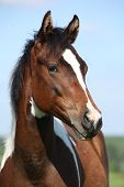 Portrait Of Beautiful Young Paint Horse Mare