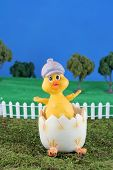stock photo of duck egg blue  - and easter chick in a freshly cracked egg on grass with blue background - JPG