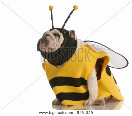 Bulldog Dressed Up As A Bee