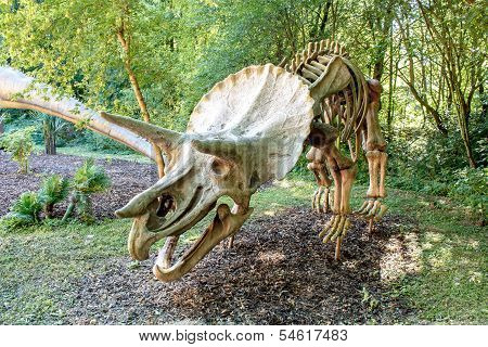 Triceratops Fossil Skeleton Over Natural Background
