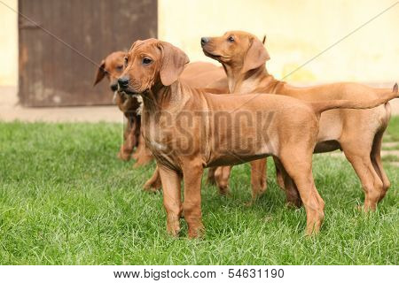 Puppies In The Garden