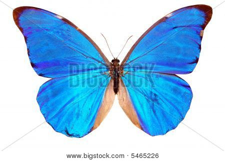 Blue Brilliant Butterfly Cutout