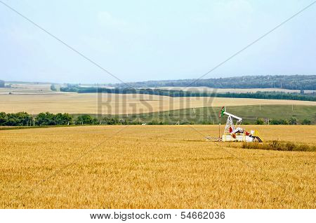 Grain Field With Oil Pump