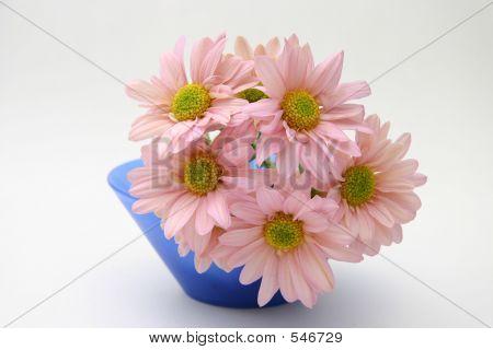 Pink Chrystanthemums