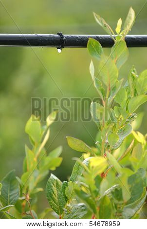 Drip Irrigation System vertical