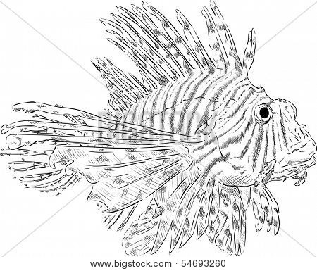 vector - Pterois volitans , isolated on background