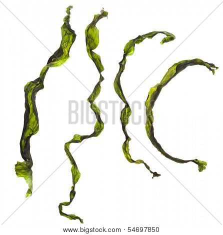 Collection set of dried seaweed kelp set close up Isolated on white background
