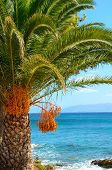 Palm Tree At The Seaside