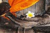 stock photo of champa  - Plumeria or Dok Champa is Lao National Flower - JPG