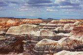 pic of petrified  - Petrified Forest National Park - JPG