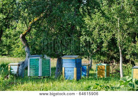 Bee Hives Under Fruit Trees In Garden. Beekeeping