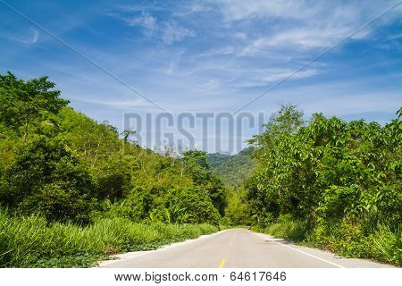 Forest road and mountain